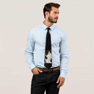 Gatinho preto e branco gravata