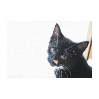 Gatinho preto e branco impressão em tela