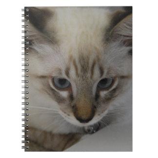 Gatinho Siamese Cadernos