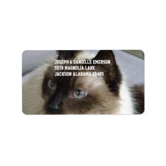 Gatinho Siamese Etiqueta De Endereço