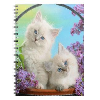 Gatinhos bonitos cadernos