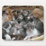 Gatinhos do sono mousepad