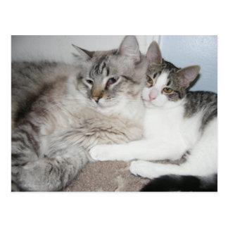 Gatinhos estragados no cartão do amor