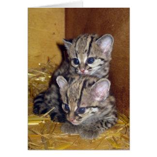 Gatinhos margay do cartão