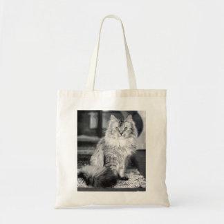 Gato 1 bolsas