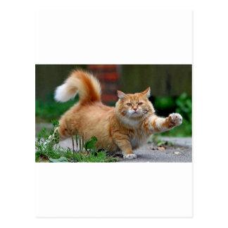 Gato alaranjado gordo grande cartão postal