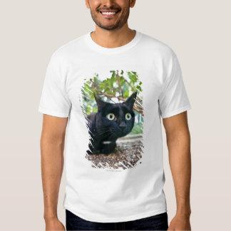 gato alertado que esconde sob o arbusto camisetas