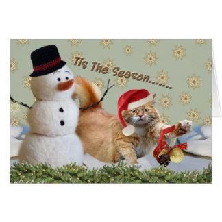 Gato amarelo isto os cartões de Natal da estação
