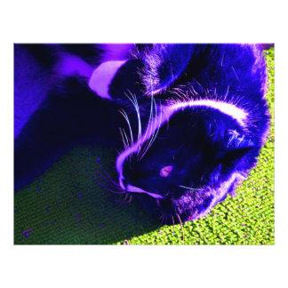 gato azul na imagem animal felino do pop art modelo de panfleto