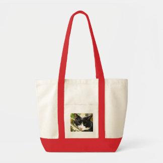gato bonito bolsa