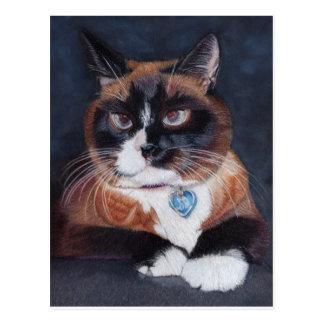 Gato bonito cartão postal