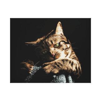 Gato bonito que joga canvas
