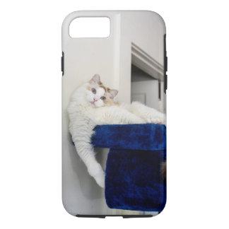 Gato branco em umas capas de iphone azuis do