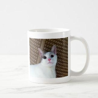 Gato branco surpreendido caneca de café