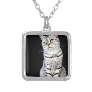 Gato britânico adulto do cabelo curto no fundo colar banhado a prata