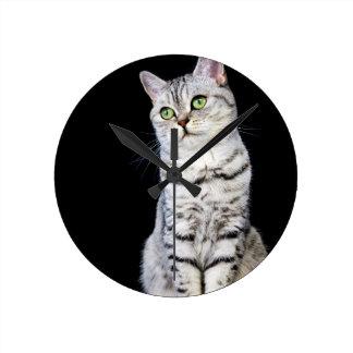 Gato britânico adulto do cabelo curto no fundo relógio redondo