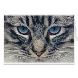Gato Cartão