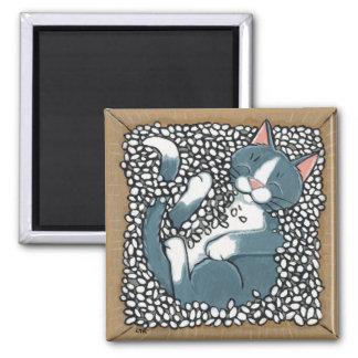 Gato cinzento do smoking que dorme na caixa de ame ímã quadrado