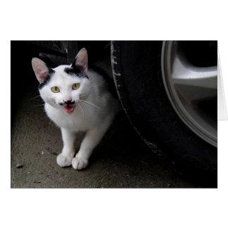 Gato com bigode cartão