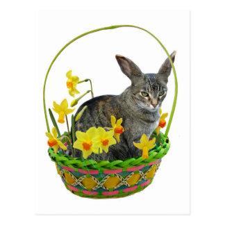 Gato da páscoa no cartão dos Daffodils Cartão Postal