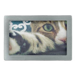 Gato de gato malhado bonito com olhos verdes