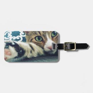 Gato de gato malhado bonito com olhos verdes etiqueta de bagagem