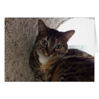 Gato de gato malhado, cartão