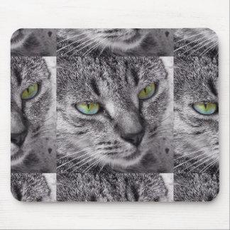 Gato de gato malhado com mousepad dos olhos verdes