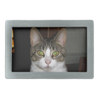 Gato de gato malhado com os olhos verdes grandes