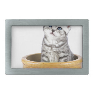 Gato de gato malhado de prata novo que senta-se na