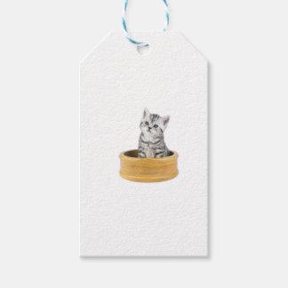 Gato de gato malhado de prata novo que senta-se na etiqueta para presente