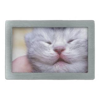 Gato de gato malhado de prata recém-nascido