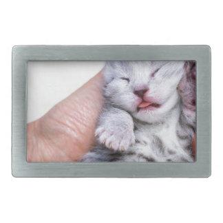 Gato de gato malhado de prata recém-nascido do