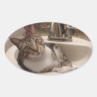 Gato de gato malhado em etiquetas do dissipador