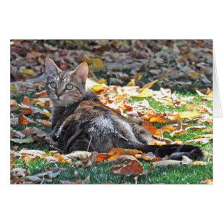 Gato de gato malhado que encontra-se no cartão das