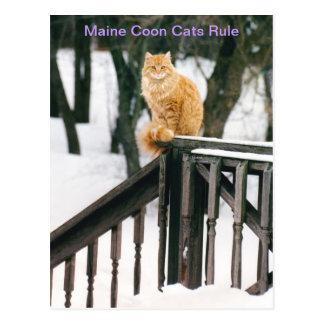 Gato de racum lindo de Maine no cartão do inverno