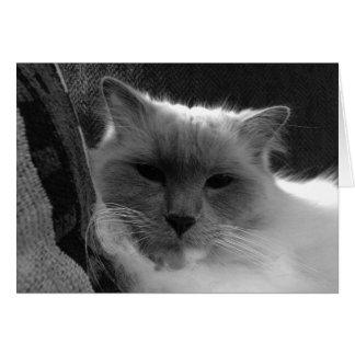 Gato de Ragdoll - noir, cartão