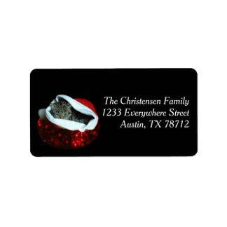 Gato de Shorthair em etiquetas vermelhas do Natal