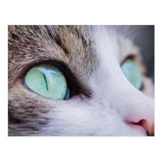 Gato de tigre cinzento com olhos verde-claro cartão postal