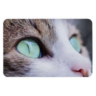 Gato de tigre cinzento com olhos verde-claro ímã