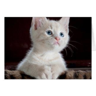 Gato do bebê cartão