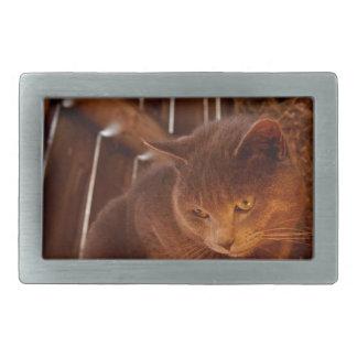 Gato do celeiro