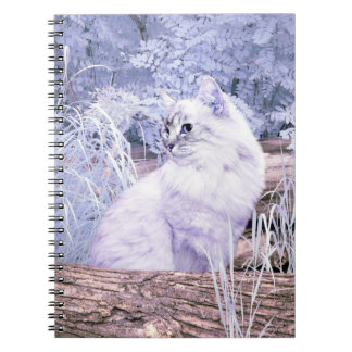 Gato do gatinho da fantasia caderno