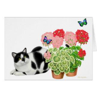 Gato do Moxie e o cartão das borboletas