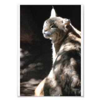 gato do prumo, jardim zoológico, Tyler Texas 2008 Artes De Fotos