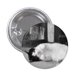 Gato do respingo da cor bóton redondo 2.54cm