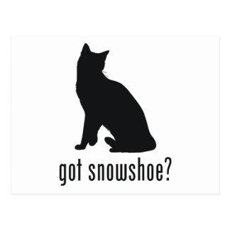 Gato do sapato de neve cartão postal