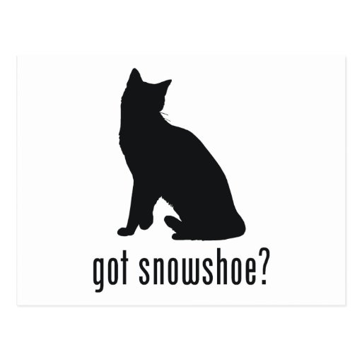 Gato do sapato de neve cartões postais