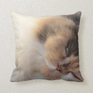 Gato do sono almofada