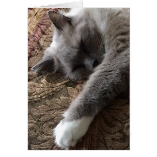 Gato do sono, cartão